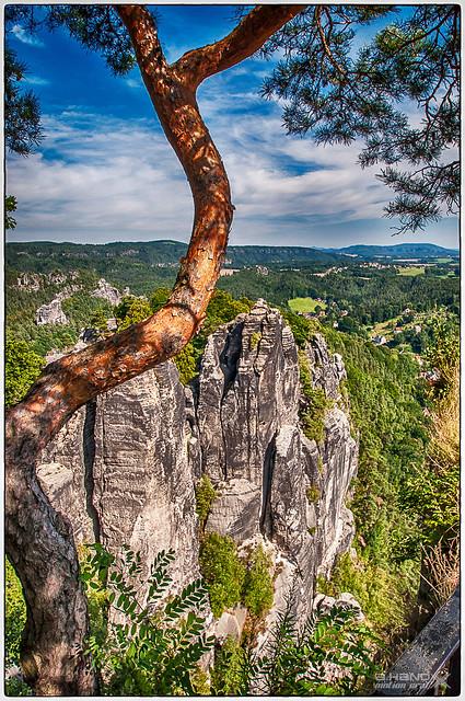 Detailszene im Elbsandsteingebirge