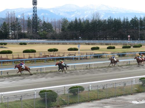 金沢競馬場の直線の追いこみ