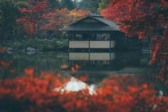 昭和紀念公園|東京 Tokyo