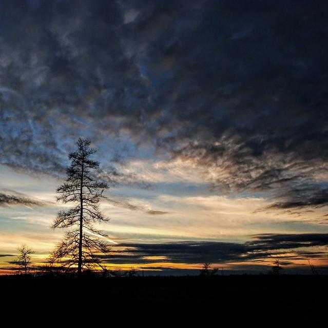 Tamarack at twilight, Sony DSC-W150