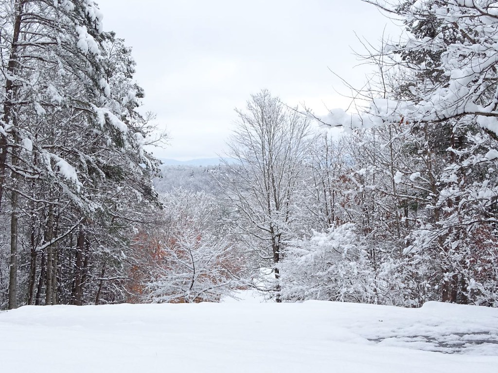December Snow at From My Carolina Home