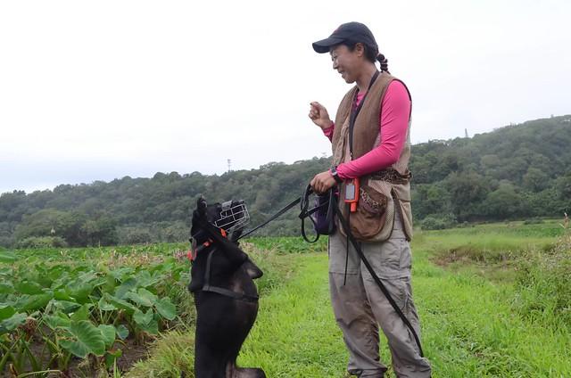 Hanalei National Wildlife Refuge Utilizes Dogs For Detecting Avian Botulism