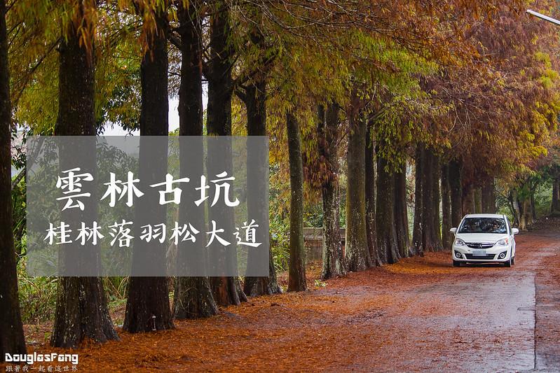 【遊記】雲林古坑桂林落羽松 (32)
