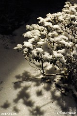 White Christmas Eve