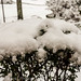 ATL_Snow_2017-8591.jpg
