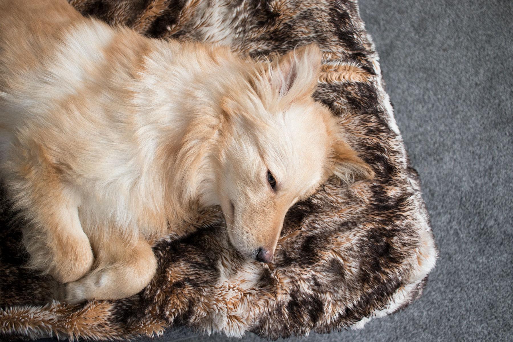 Nellie-sleeping