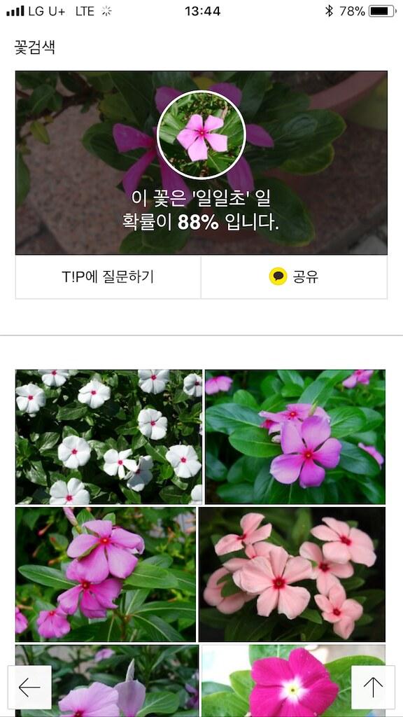 koreanapps-flowersearch12