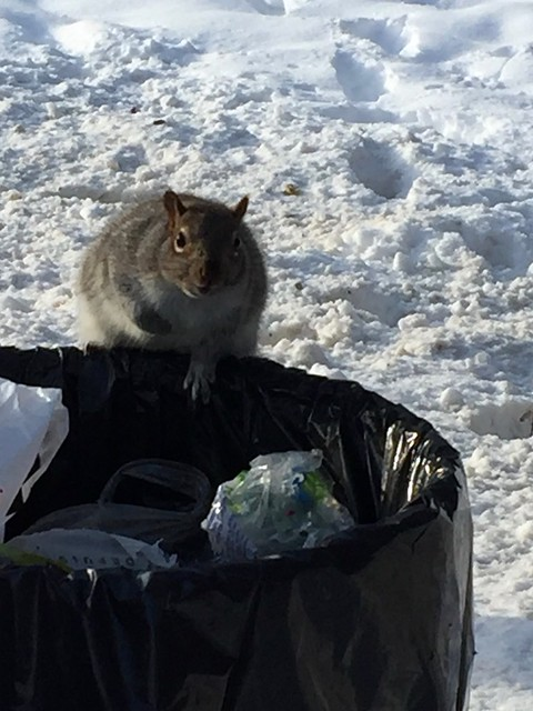 The Squirrel Snack Bar