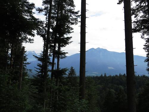 20170614 04 359 Jakobus Berg Wald