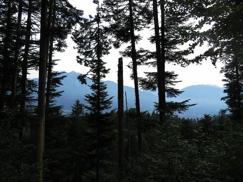 20170614 04 354 Jakobus Berge Wald