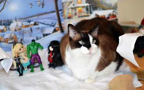 Cat Photo Bomb