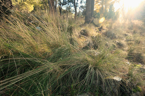 tasmania tassie state australia vacation holiday june 2017 island south commonwealth oz bass strait hobart tas plant green scrub bush native vegetation sun sunlight morning ray sunrise tree nature warm grass sky mist water vapor vapour drop droplet scene landscape sight cataract gorge basin