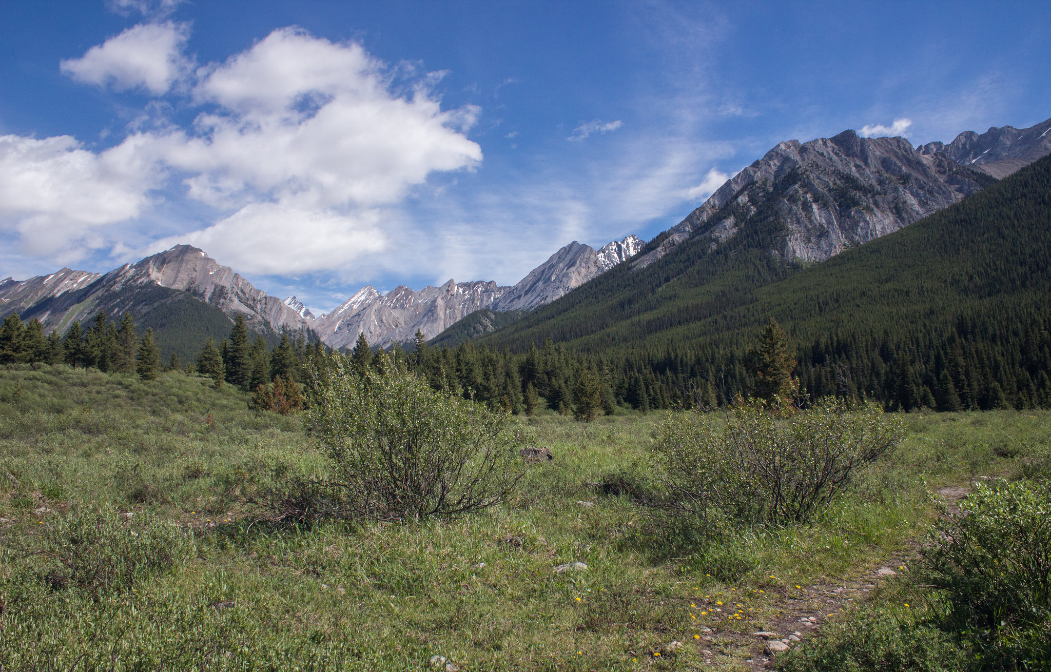 Alpine meadow at the inkpots