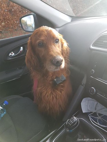 [Reunited] Wed, Dec 13th, 2017 Found Male Dog - R150, Meath