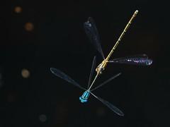 fly fatass fly