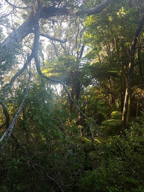 Dec 29 NZ holiday - Auckland