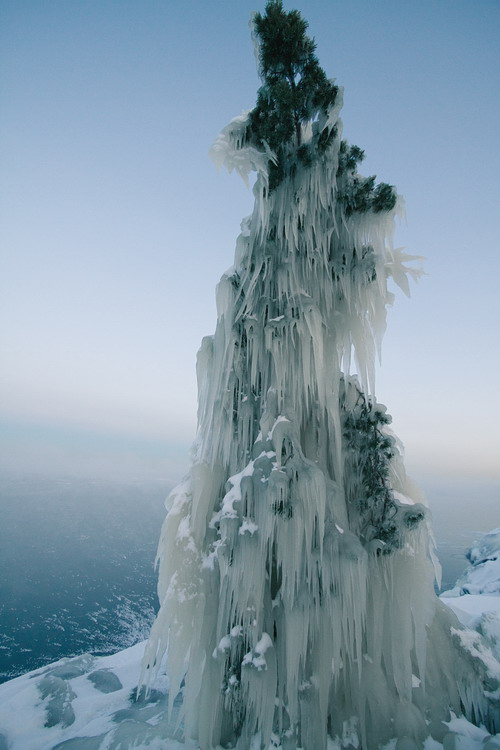Tree laden with ice along the shore of Lake Lagoda following an ice storm