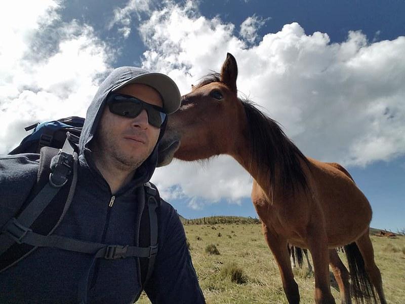 Pasochoa • Horses
