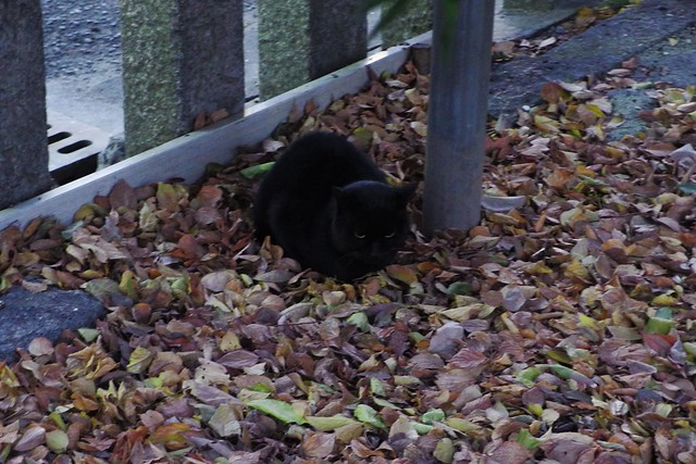 Today's Cat@2017-12-16