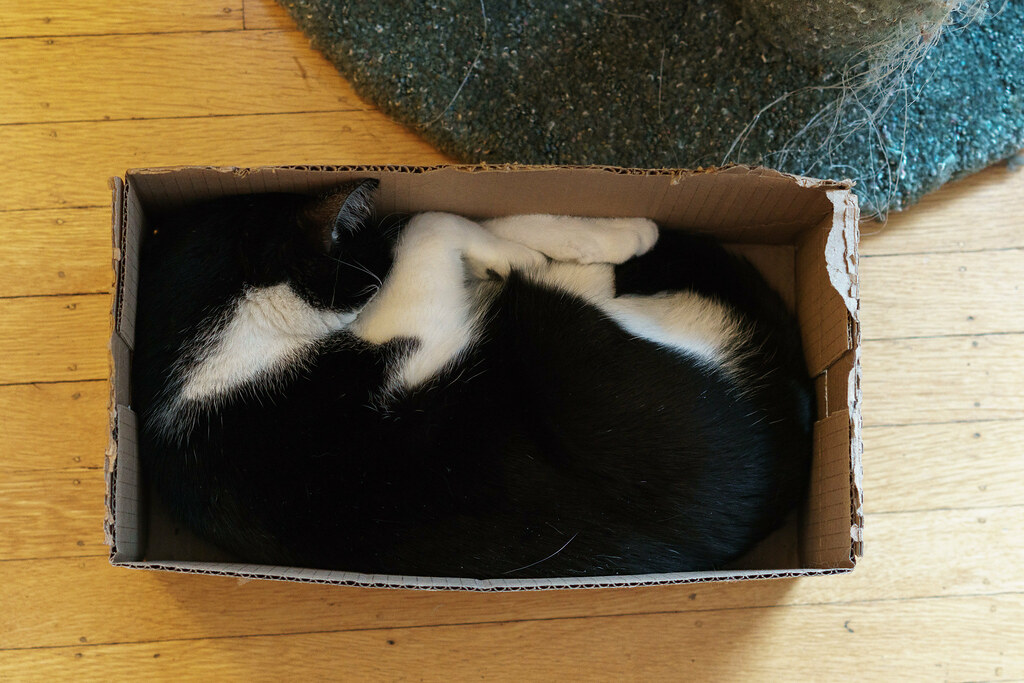 Our cat Boo sleeps all squished up in one of his favorite boxes
