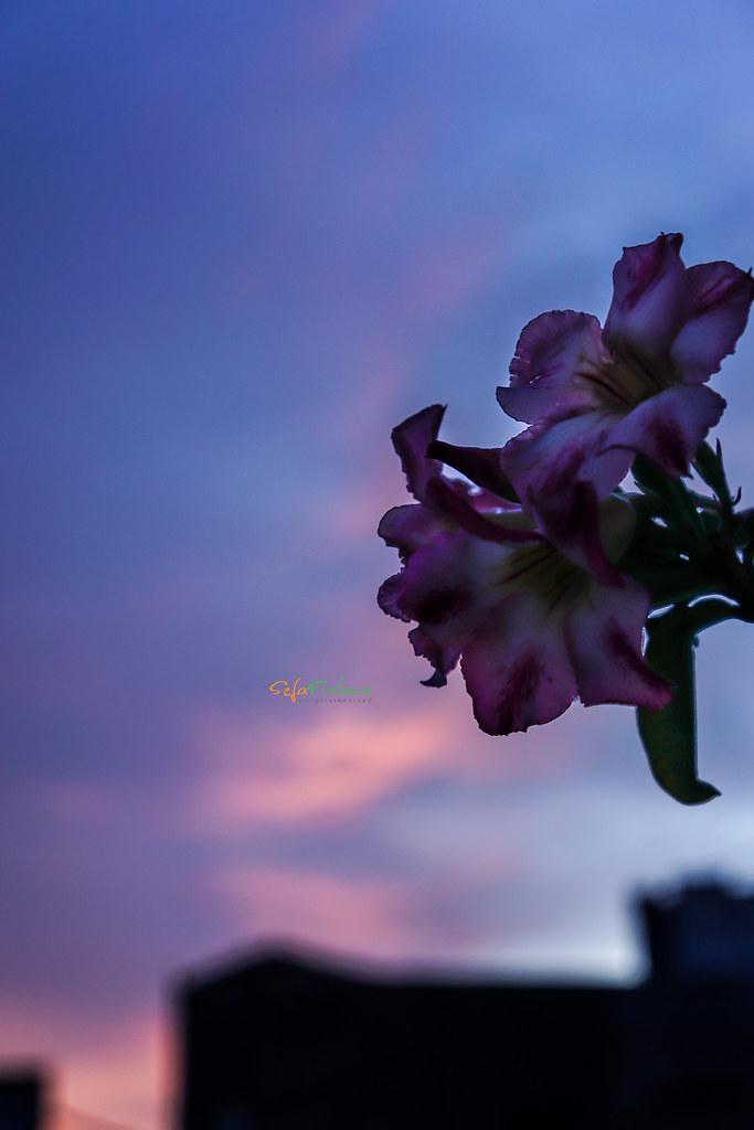 Sunset-311217