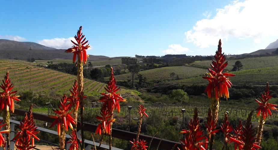 Rondreis Zuid-Afrika: Tuinroute, Hemel en Aarde Vallei, wijn proeven | Mooistestedentrips.nl