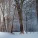 Winter Wonderland, New Jersey by NathanJNixon