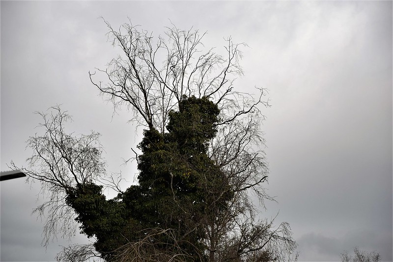 Feldbrunnen 02.01 (11)