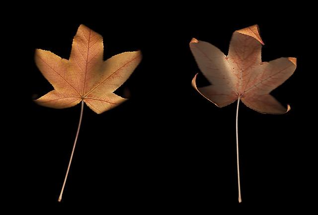 Leaf 29