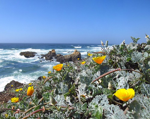 California poppies and sea stacks along the trail north of Glass Beach, California