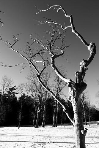 2017 canada novascotia ns mountuniacke eosm5 bnw blackandwhite tree