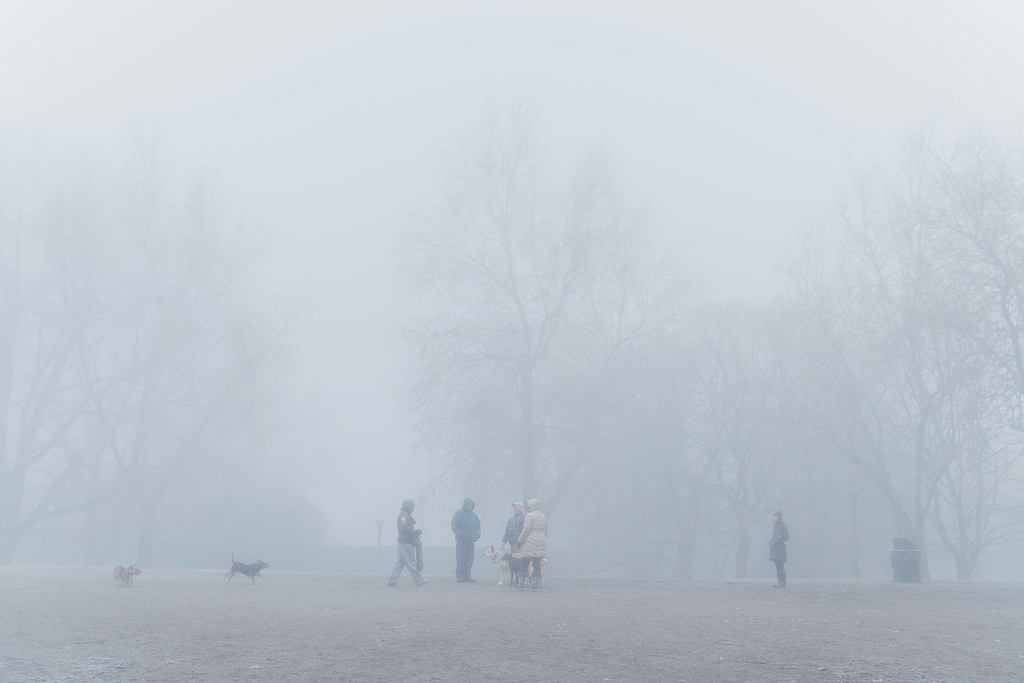 A foggy and frosty morning at the dog park at Irving Park in the Irvington neighborhood of Portland, Oregon