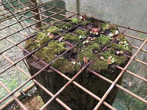Cool Log Planting