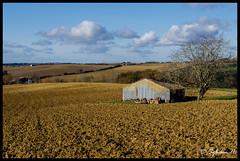 La campagne des coteaux de Cadours