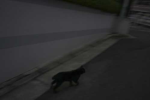 JF C9 21 006 福岡市 東区 Sony α9 × Sonnar 35mm F2.8 ZA#