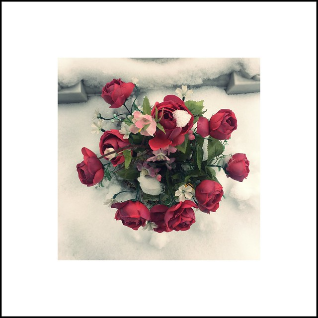 Fleurs dans la neige #02