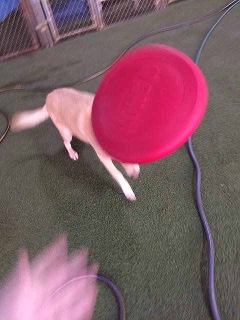 01/06/18 Frisbee Catch! :)