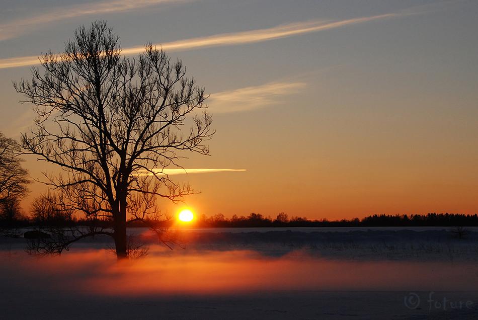 Foggy, sunset, golden, loojang, talvine, talv, Kaido Rummel
