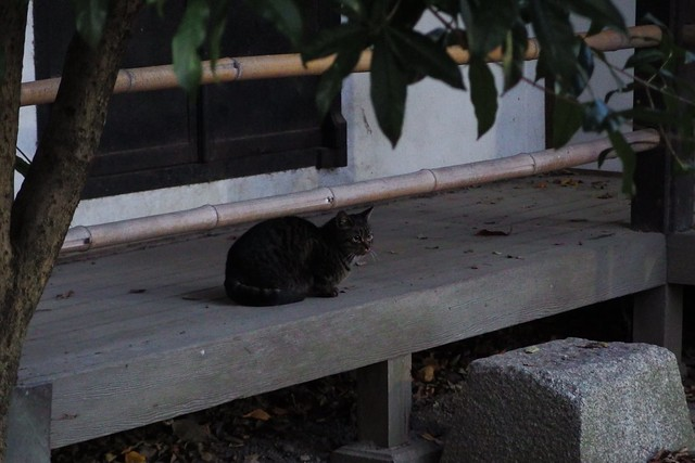 Today's Cat@2017-12-12