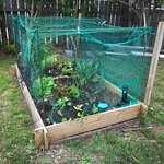 Bigger vege bed