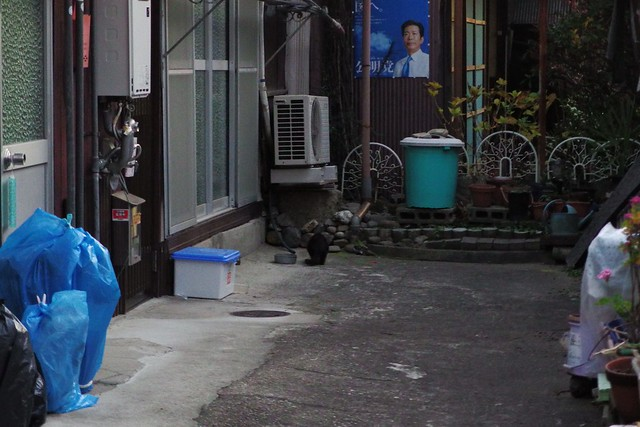 Today's Cat@2017-12-23