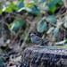 Sparrow Legs