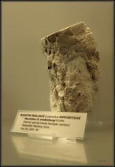 Museum Croatia Rijeka Natural History