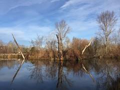Still Wetland