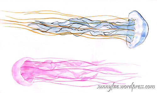 long jellyfish sketch