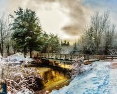 Irishtown Nature Park Christmas