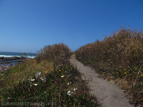 The trail along the clifftops north of Glass Beach, California