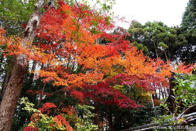 鷺森神社10