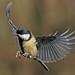 Birds in flight... by Gary Neville