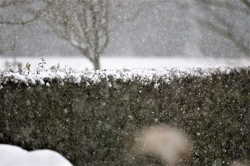 Snow 10.12 (4)
